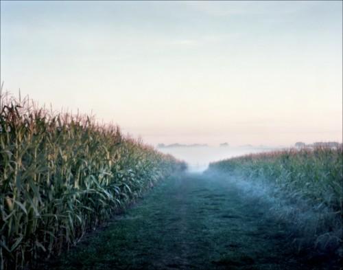 Antietam cornfield